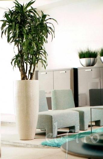 Тему комнатные растения в интерьере